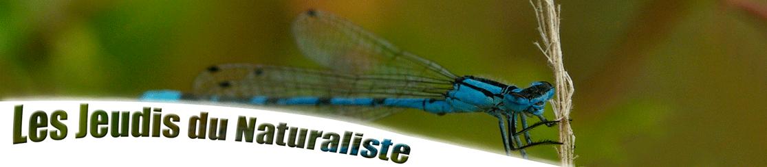 Bandeau-Les-jeudis-du-Naturaliste