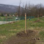 Plantation du verger communal avec l'école de Clarafond