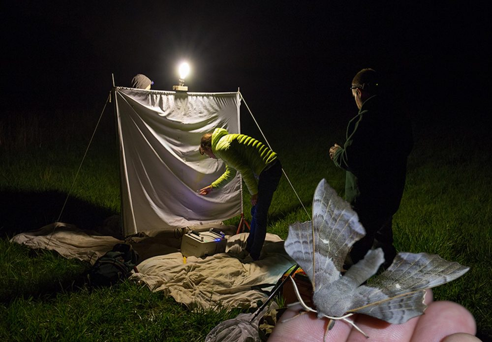 La nuit est belle…. et les papillons volent !